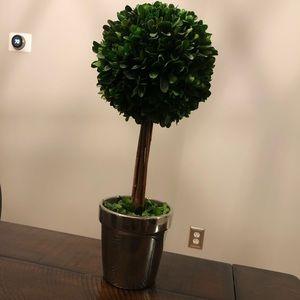 Boxwood topiary!